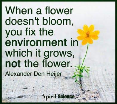 when flower doesnt bloom